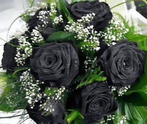 roses_black_by_moon_atic